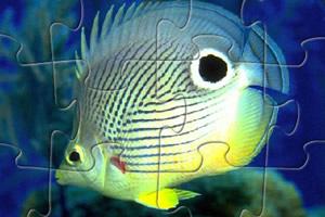 水族馆鱼类拼图