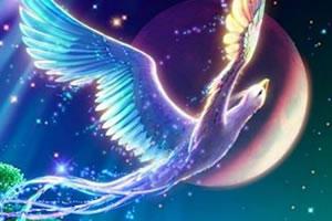 幻想天堂鸟找星星