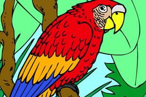金刚鹦鹉上色