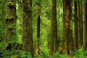 野生森林找靶子