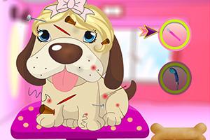 可爱小狗做护理