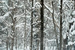 冬季森林找靶子