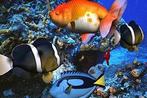 寻找海底宝藏