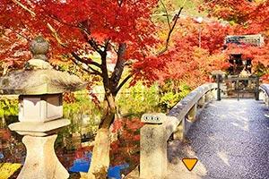 逃出日本公园