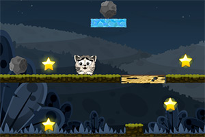 猫咪夜空找星星