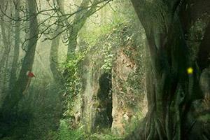 逃离神秘朦胧的森林