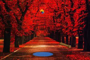 逃离红叶森林