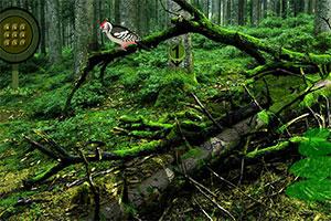 粘土森林逃脱