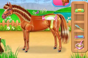 小马护理和骑马