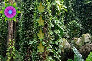逃离亚马逊雨林