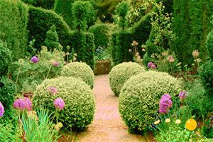 大花园植物逃生