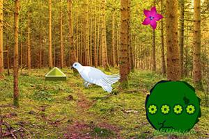 逃离白鸽之森