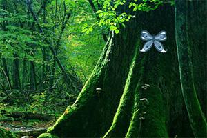 逃离未知丛林2