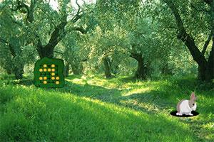 橄榄树森林逃