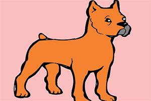小狗狗图画册