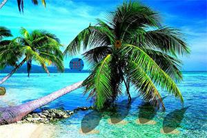 逃离爱情珍珠岛