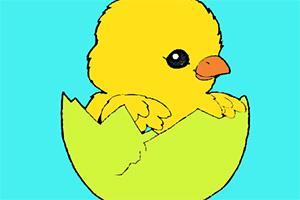 小鸡图画册