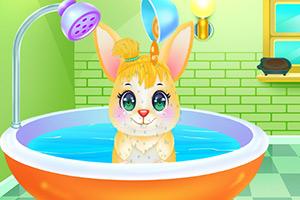 照顾可爱小兔