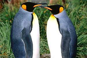 可爱企鹅拼一拼