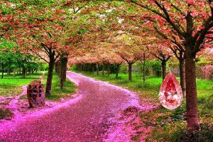 紫幻森林逃脱